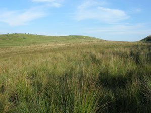 Proposed site of wind turbine on rocky knoll with improved grassland